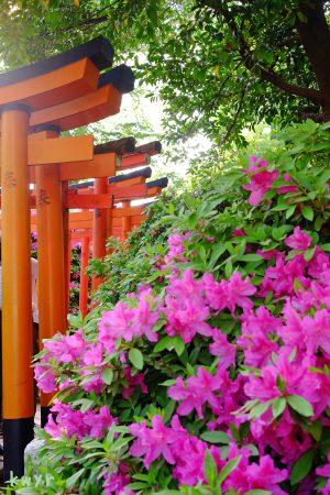 乙女稲荷神社の鳥居