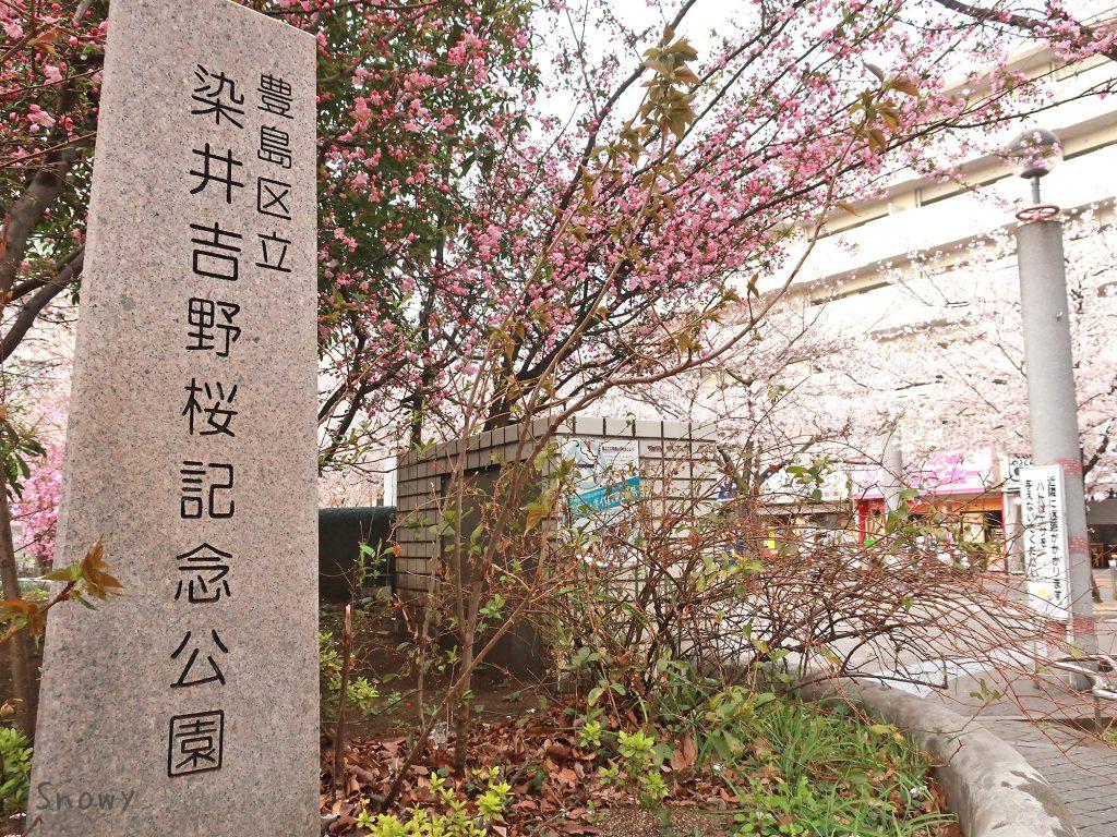 豊島区立 染井吉野桜記念公園