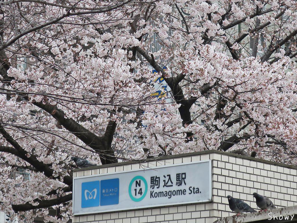 染井吉野桜記念公園から見たメトロ入り口