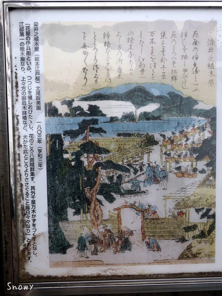 『絵本江戸桜』に収録された染井之植木屋の絵(1803年)