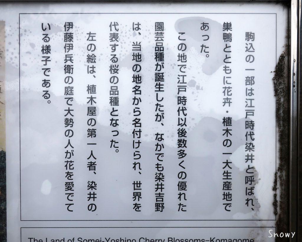 染井吉野桜記念公園の説明版