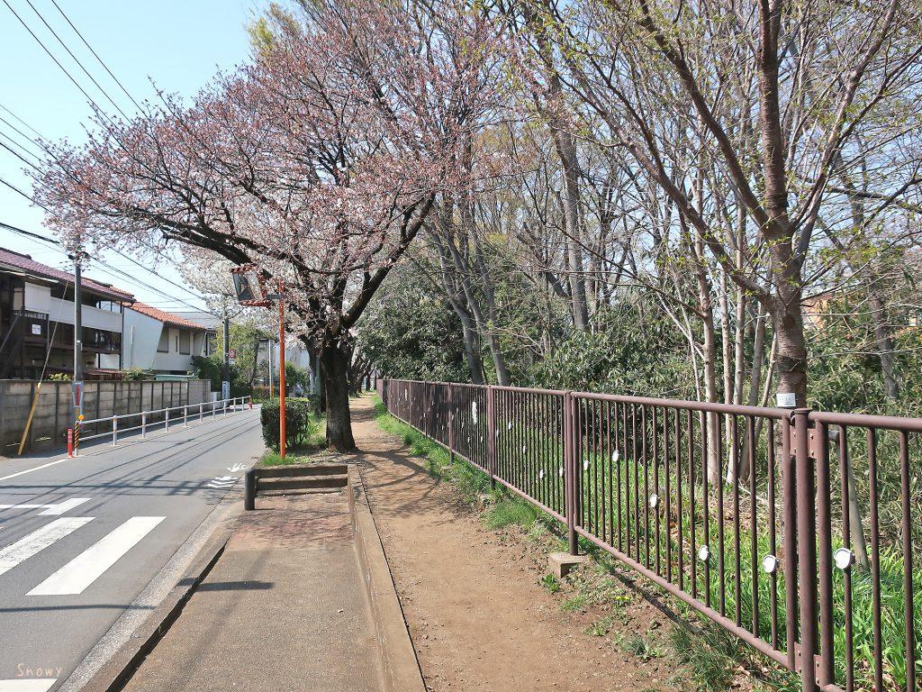 上水桜通り