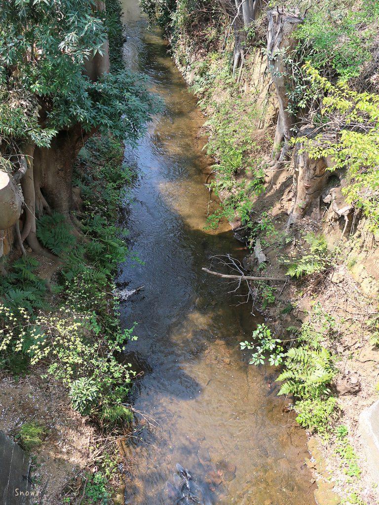 小桜橋から見た玉川上水上流
