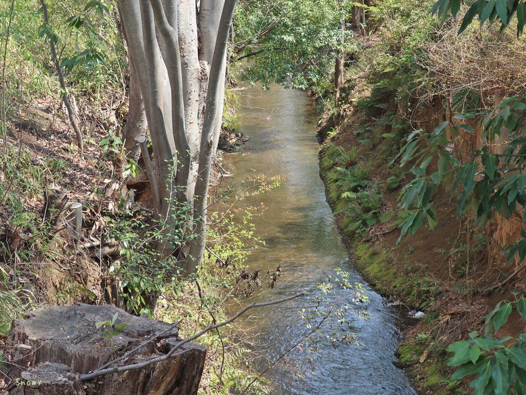小桜橋から見た玉川上水下流