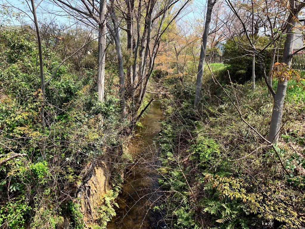 貫井橋から見た玉川上水下流