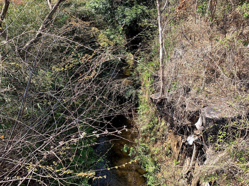 貫井橋から見た玉川上水上流