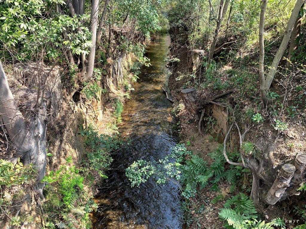小平桜橋から見た玉川上水下流