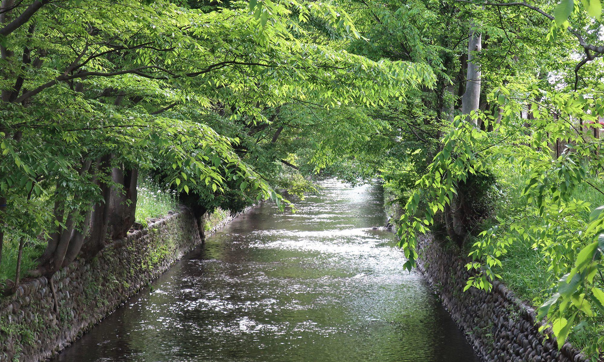 稲荷橋から見た玉川上水上流方面